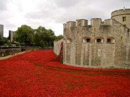 Poppy art instalment at Tower of London in 2014