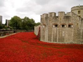 Poppy art instalment at Tower of London in 2014